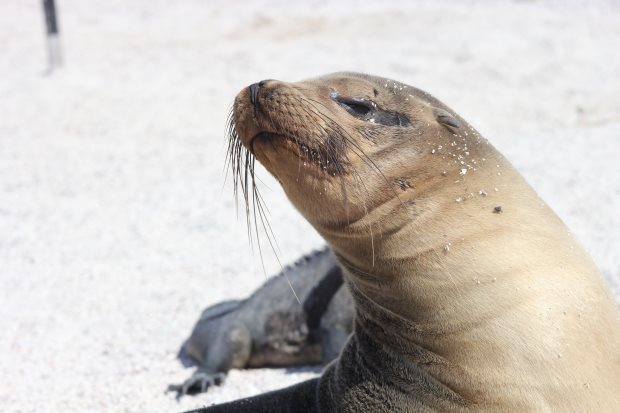 Why is the Galapagos islands a world heritage?