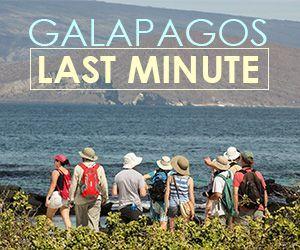 Galapagos Cruises Last Minute