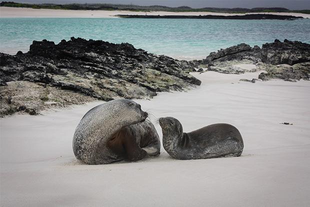 Galapagos Islands cruise trips