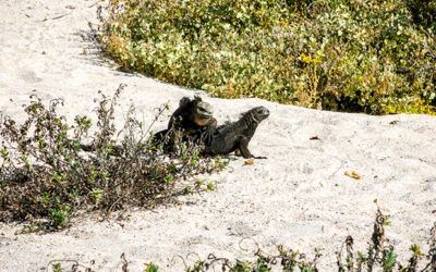 #GalapagosCruises Hashtag