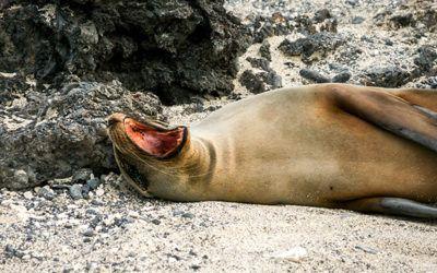 #GalapagosCruises Hashtag Twitter