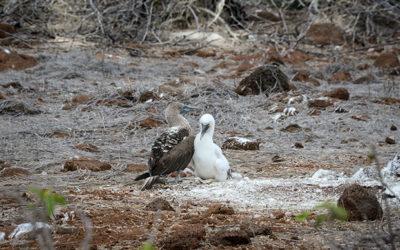 #GalapagosIsland hashtag Twitter
