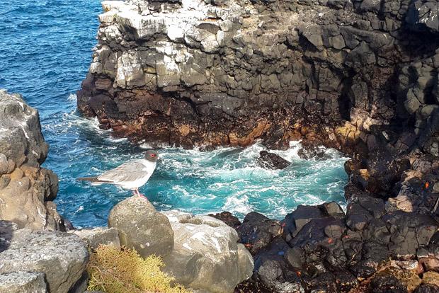 Catamaranes a las Islas Galápagos agosto 2017