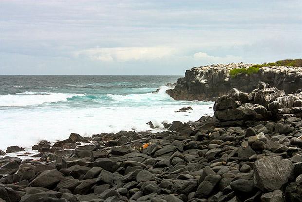 Catamaranes baratos a las Islas Galápagos abril 2020
