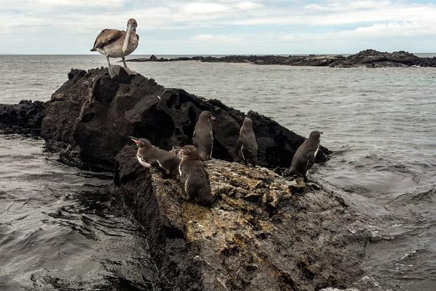 Catamaranes con descuento a las Islas Galápagos julio 2017