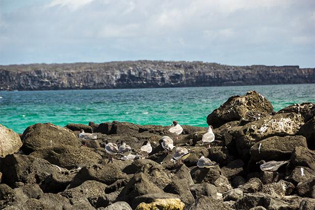 Catamaranes de lujo a las Islas Galápagos 2017