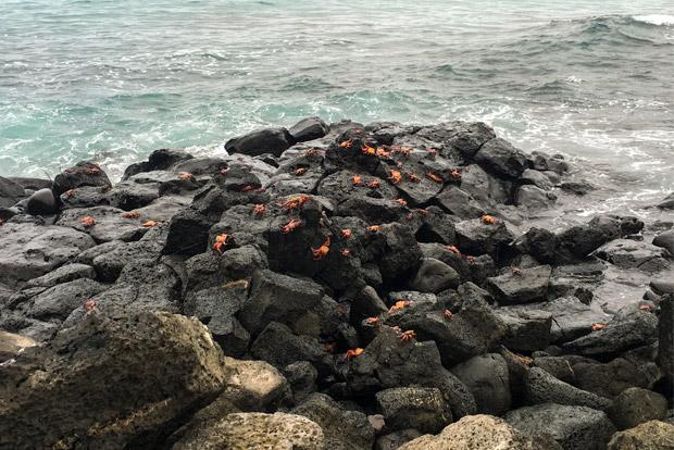 Catamaranes en oferta a las Islas Galápagos agosto 2020