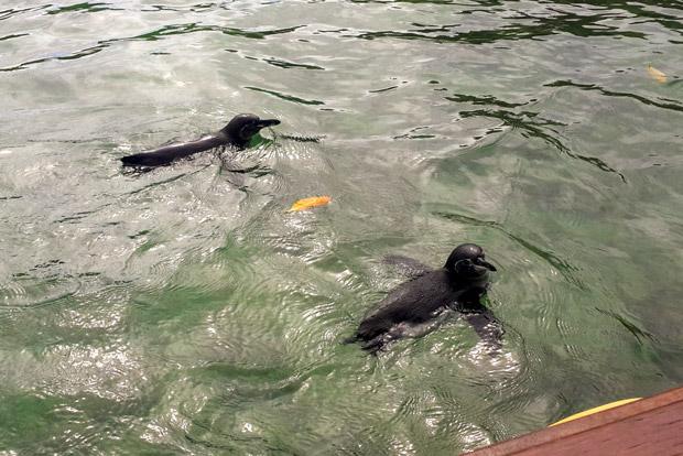 Catamaranes familiares a las Islas Galápagos octubre 2017