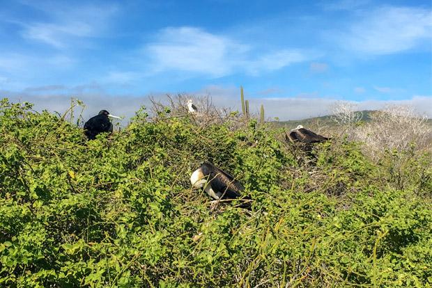Catamaranes para cuatro personas a las Islas Galápagos agosto 2017