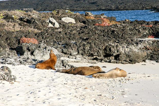 Catamaranes para parejas a las Islas Galápagos marzo 2020