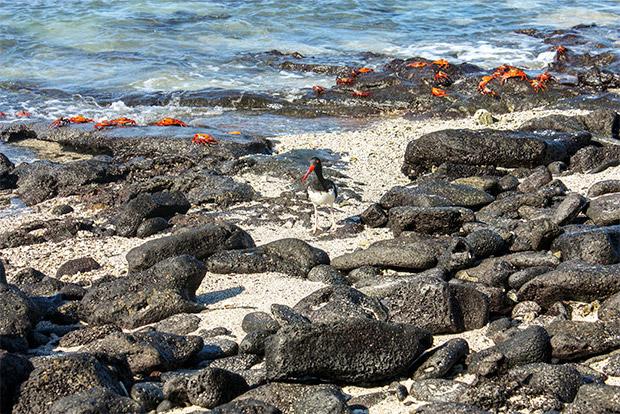 Catamaranes para parejas a las Islas Galápagos septiembre 2020