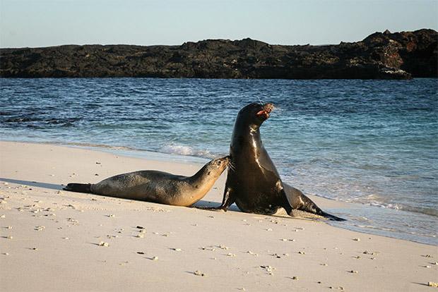 Cruceros a las Islas Galápagos junio 2020