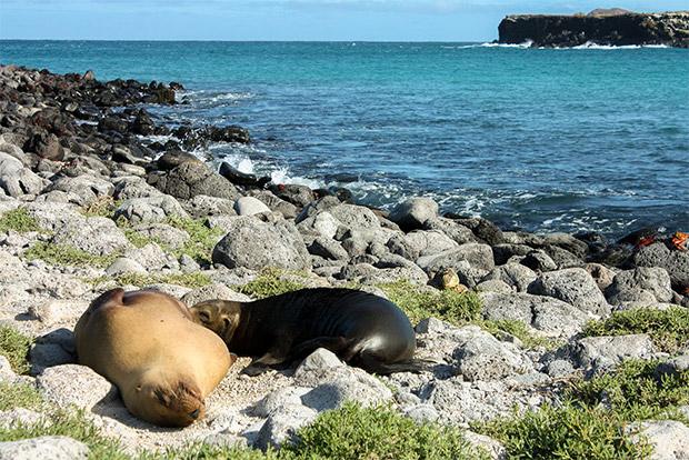 Cruceros a las Islas Galápagos octubre 2020