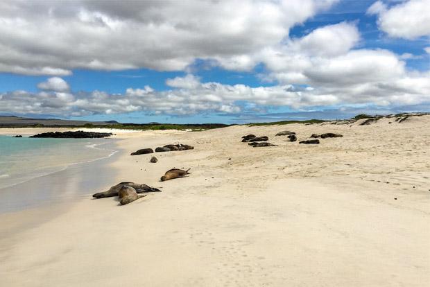 Cruceros a las Islas Galápagos para 10 personas agosto 2020