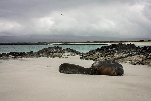 Cruceros a las Islas Galápagos para 13 personas mayo 2020