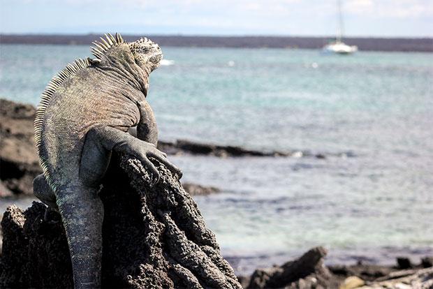 Cruceros a las Islas Galápagos para 13 personas noviembre 2019