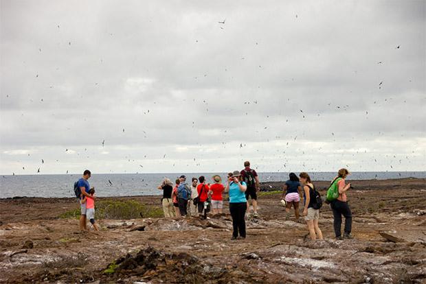 Cruceros a las Islas Galápagos para 14 personas enero 2020