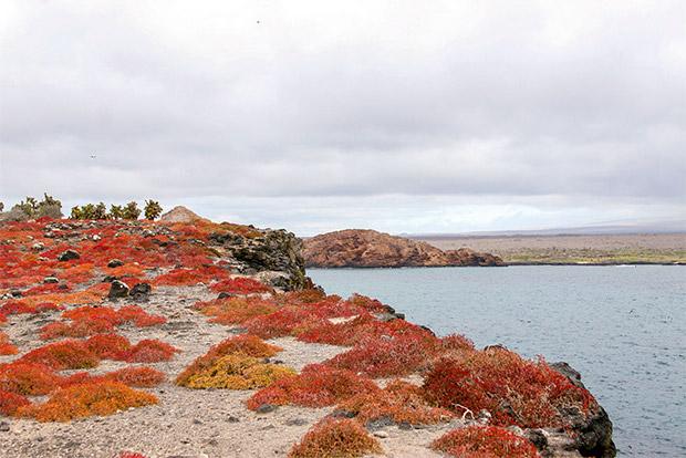Cruceros a las Islas Galápagos para 15 personas julio 2020