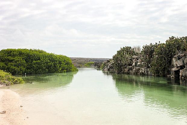 Cruceros a las Islas Galápagos para 8 personas mayo 2017