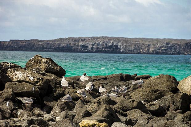 Cruceros a las Islas Galápagos para 9 personas agosto 2017