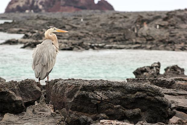 Cruceros a las Islas Galápagos para Jubilados