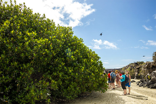 Cruceros baratos a las Islas Galápagos julio 2020