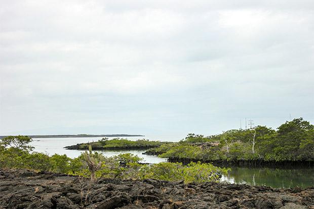 Cruceros con descuento a las Islas Galápagos julio 2020