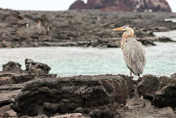 Cruceros de lujo a las Islas Galápagos abril 2017