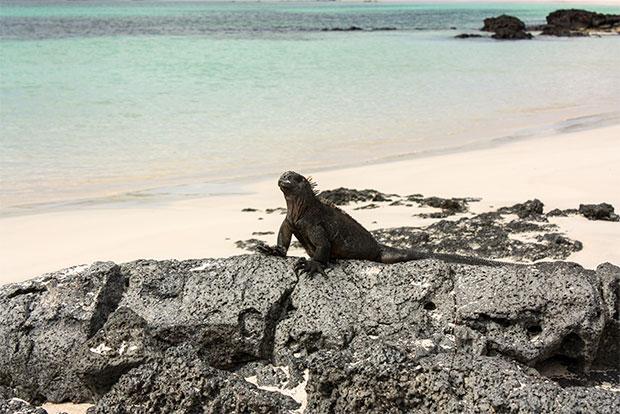 Cruceros de lujo a las Islas Galápagos diciembre 2019