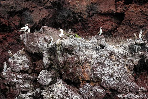 Cruceros de lujo a las Islas Galápagos junio 2020