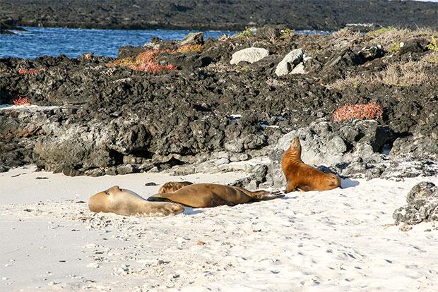 Cruceros para parejas a las Islas Galápagos diciembre 2019