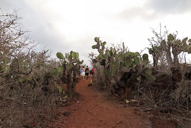 Paquetes Turísticos de lujo a islas Galápagos octubre 2019