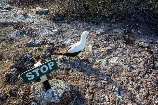 Paquetes Turísticos a islas Galápagos para grupos noviembre 2019