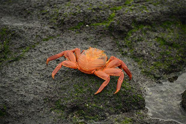 Paquetes Turísticos a islas Galápagos para parejas