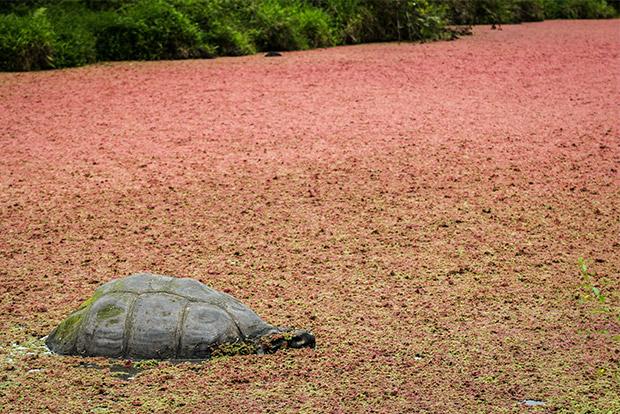 Paquetes Turísticos a las Islas Galápagos 2017