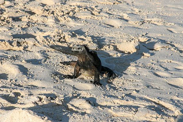 Paquetes Turísticos a las Islas Galápagos enero 2020