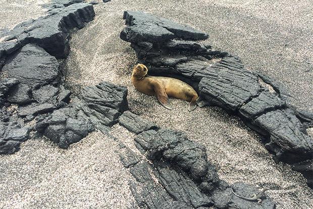 Paquetes Turísticos a las Islas Galápagos junio 2020