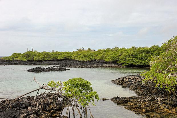 Tours Islas Galápagos febrero 2017