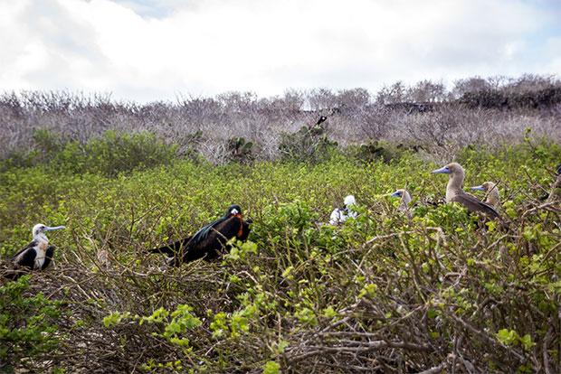 Tours a islas Galápagos de lujo