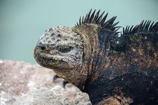 Tours a islas Galápagos para grupos