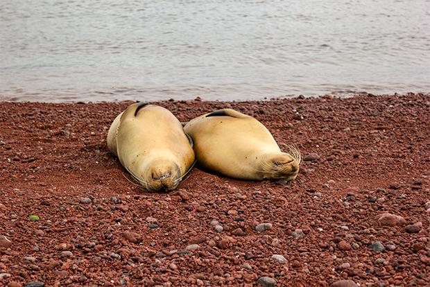 Tours a islas Galápagos todo incluido noviembre 2019