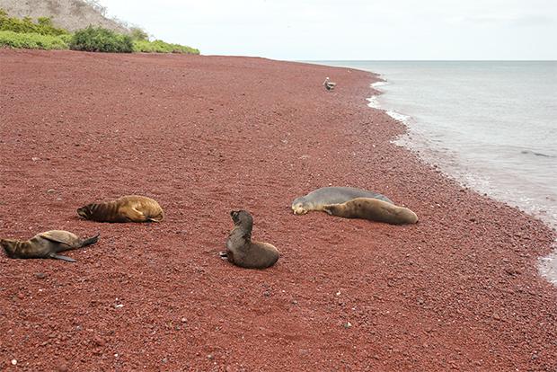 Tours a islas Galápagos todo incluido