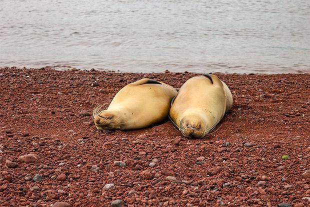 Turismo a Islas Galápagos enero 2020