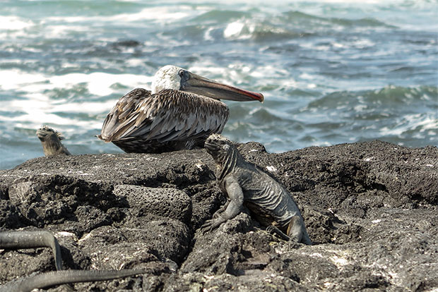 Vacaciones en Islas Galápagos diciembre 2019