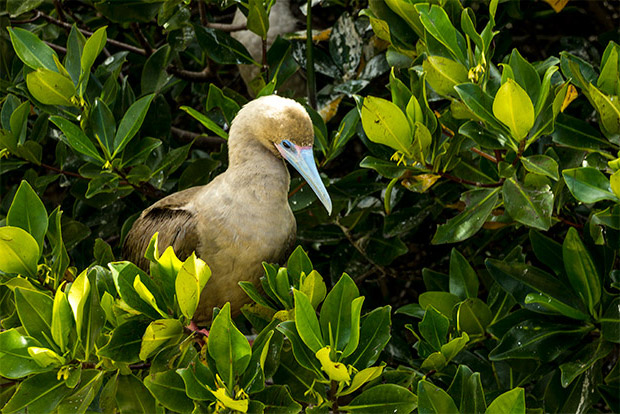 Vacaciones en Islas Galápagos julio 2020