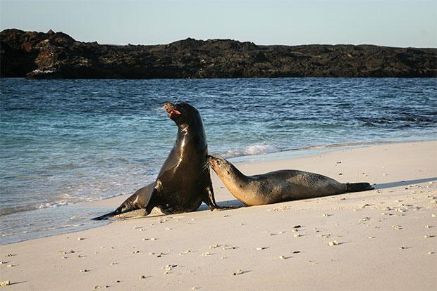 Viajar en Crucero a las Islas Galápagos desde Botsuana