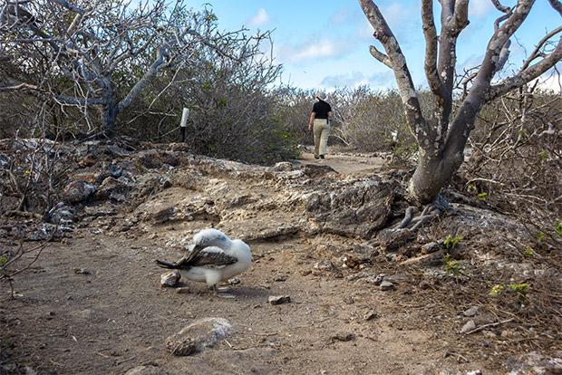 Viajar en Crucero a las Islas Galápagos desde República de Macedonia