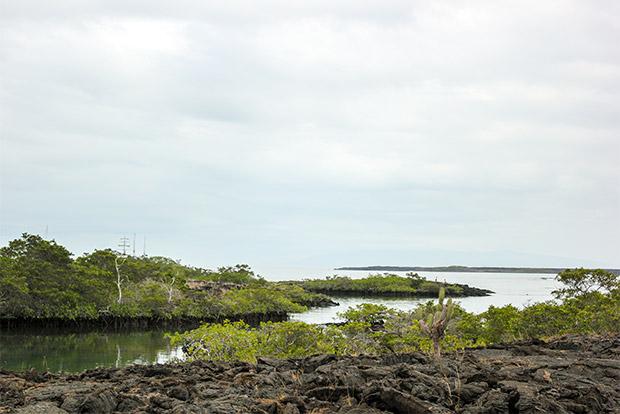 Viajar en Crucero a las Islas Galápagos desde San Cristóbal y Nieves