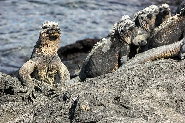 Viajar en Crucero a las Islas Galápagos desde Sierra Leona