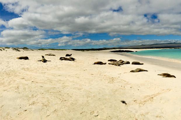 Viajar en Crucero a las Islas Galápagos desde Zimbabue